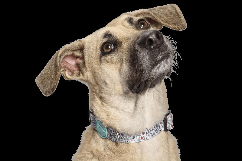 Morso® - Collare per cani | ESKIMO KISS