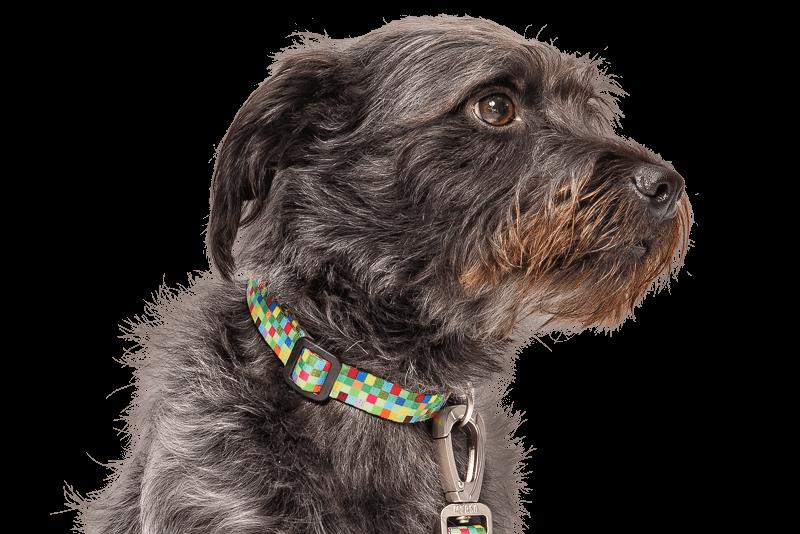 Morso® - Collare per cani | SQUARE GARDEN