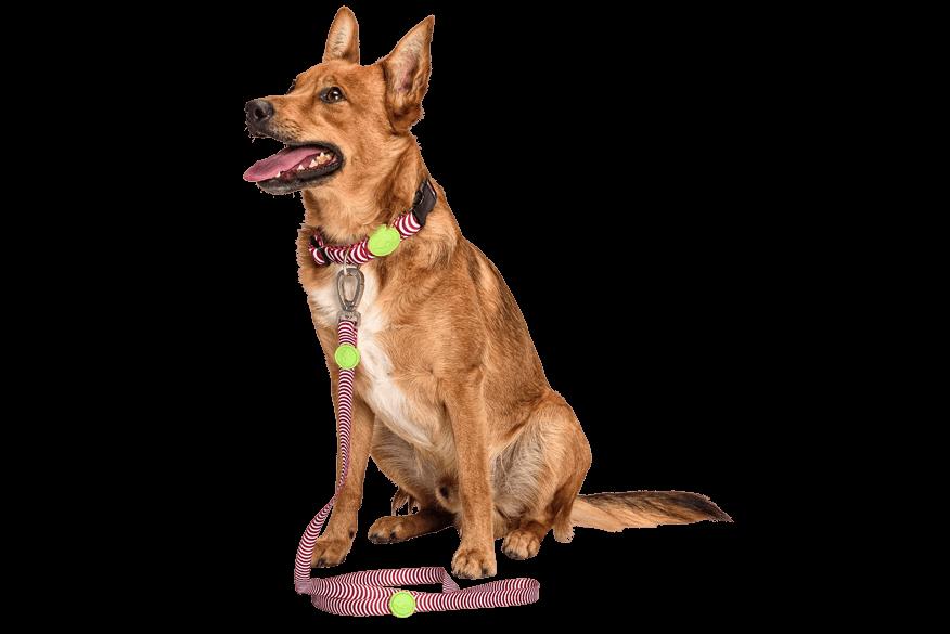 Morso® - Guinzaglio per cani | ROUTINE