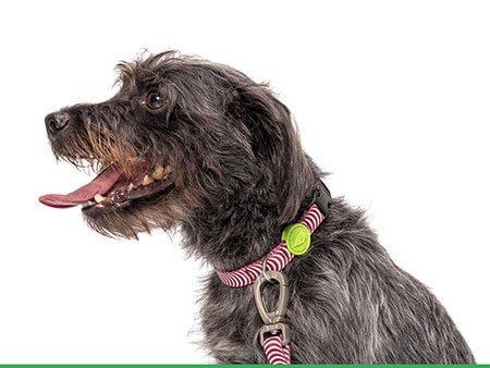 Morso® - Collare per cani | ROUTINE