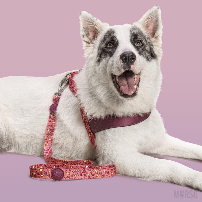Morso® - Guinzaglio per cani | PINK THINK