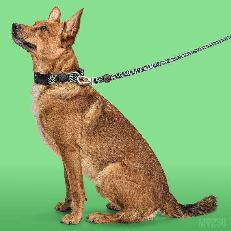 Morso® - Guinzaglio per cani | RAGE LABYRINTH