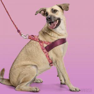 Morso® - Pettorina per cani | PINK THINK
