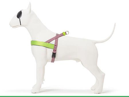 Morso® - Pettorina per cani | ROUTINE