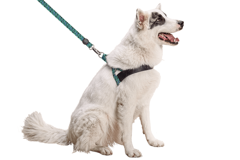 morso the dog harness that expresses your emotions