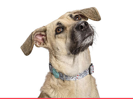 Morso® - Dog collar | ESKIMO KISS