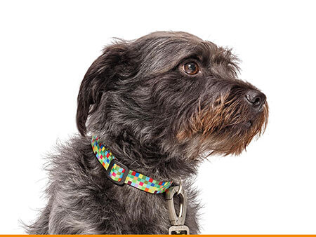 Morso® - Dog collar | SQUARE GARDEN