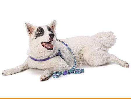 Morso® - Dog harness | COLORED SUN