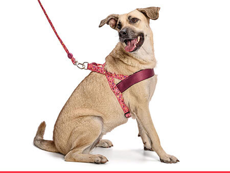 Morso® - Dog harness | PINK THINK