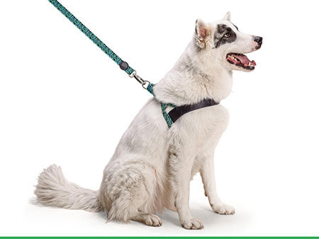 Morso® - Dog harness | RAGE LABYRINTH