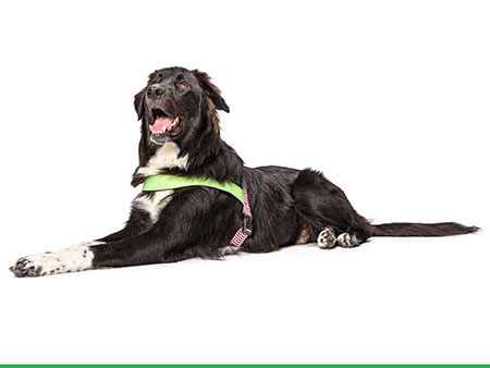 Morso® - Dog harness | ROUTINE