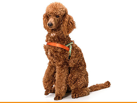 Morso® - Dog harness | SQUARE GARDEN