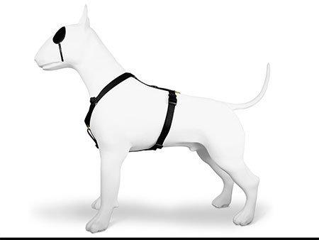 Morso® - Pettorina H per cani | GOLD CAVIAR