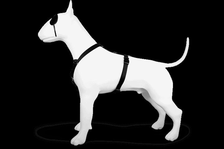 Morso® - Pettorina H per cani | PURENESS