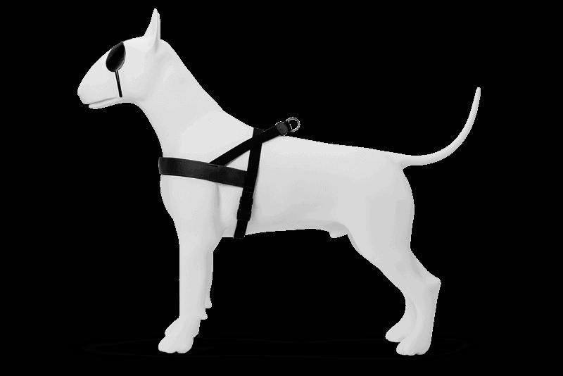 Morso® - Pettorina per cani | PURENESS