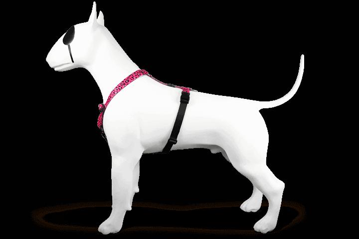 Morso® - Pettorina H per cani | BUBBLE LEO