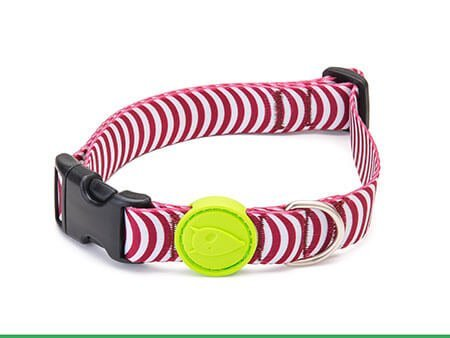 Morso® - Dog Collar | ROUTINE