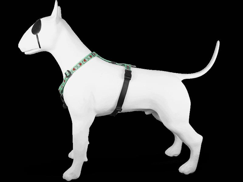 Morso® - Pettorina ad H per cani | JOLLY ROGER