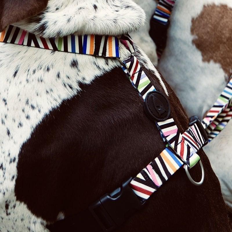 Morso® - H harness | SPAGHETTI INCIDENT